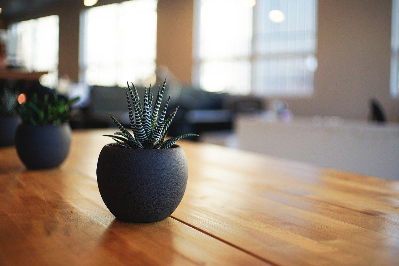 plant-1081856_1280.jpg